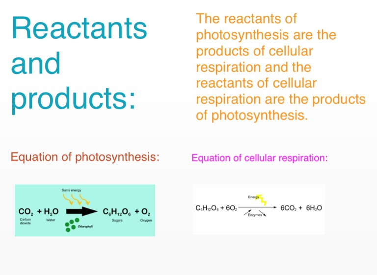 respiration cellular photosynthesis vs