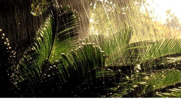 Tropical rainforest screen 3 on flowvella presentation software a tropical rainforest is a forest of tall trees and a region of year round warmth an average 50 to 260 inches of rainfall yearly rainforests belong to the freerunsca Choice Image
