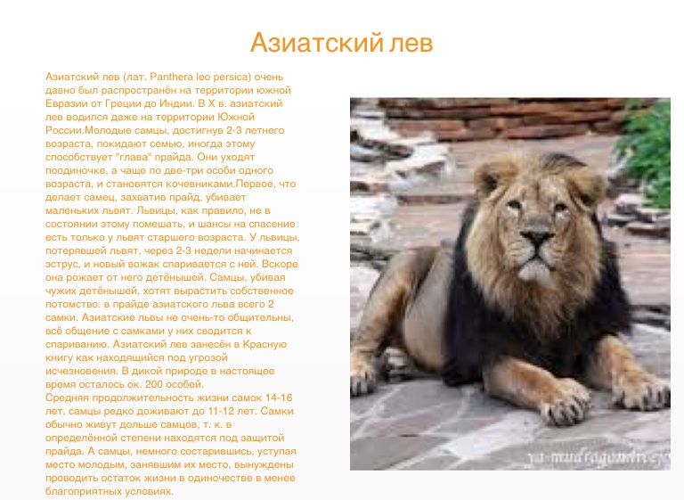 lion and asiatic lions essay