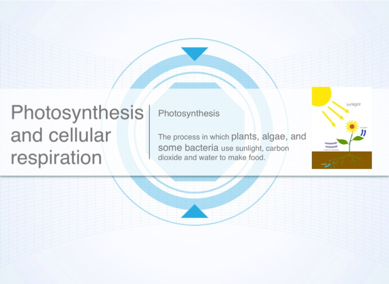 Pin Cellular-respiration-and-photosynthesis-venn-diagram ...