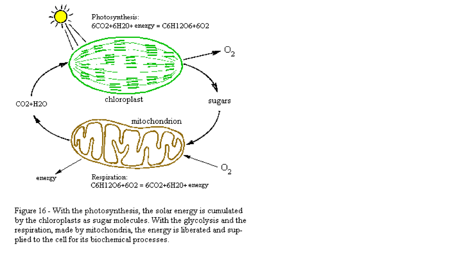 Photosenthisiscellular respiration flowboard on flowvella cellular respiration equation c6h12o6 o2 co2 h20 energy ccuart Image collections