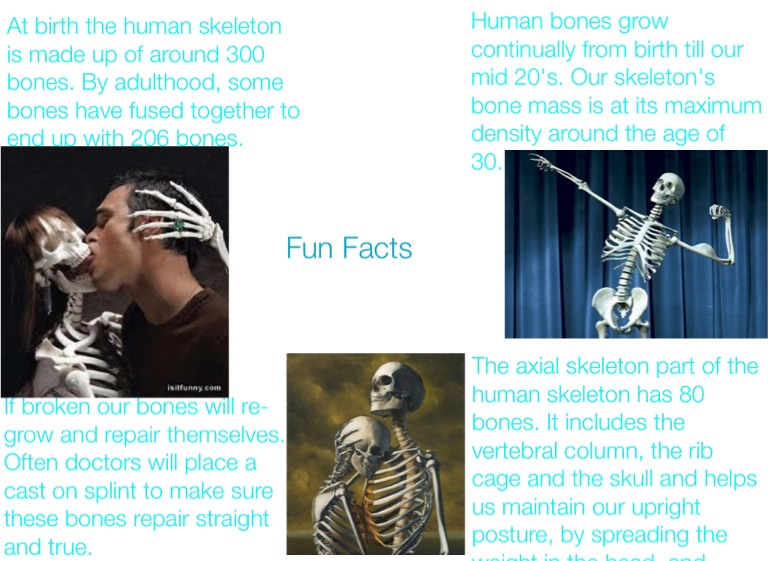 Skeletal System - Screen 2 on FlowVella - Presentation