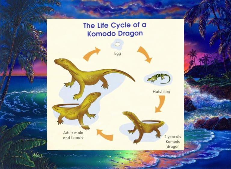 Komodo Dragons - Screen 3 on FlowVella - Presentation Software for ...