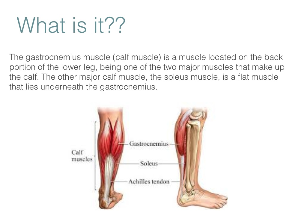 Gastrocnemius Muscle Screen 2 On Flowvella Presentation Software
