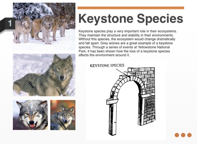 impact of the loss of keystone species essay